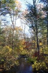 Autumnal Brook (Read2me) Tags: pree cye river creeek stream brook autumn water thechallengefactory friendlychallengessweepwinner challengeclubwinner gamewinner