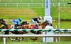 "2015-08-23 (91) r6 Roimes Chirinos on #8 Gator Boy (JLeeFleenor) Tags: photos photography md marylandhorseracing marylandracing jockey جُوكِي ""赛马骑师"" jinete ""競馬騎手"" dżokej jocheu คนขี่ม้าแข่ง jóquei žokej kilparatsastaja rennreiter fantino ""경마 기수"" жокей jokey người horses thoroughbreds equine equestrian cheval cavalo cavallo cavall caballo pferd paard perd hevonen hest hestur cal kon konj beygir capall ceffyl cuddy yarraman faras alogo soos kuda uma pfeerd koin حصان кон 马 häst άλογο סוס घोड़ा 馬 koń лошадь winner chestnut maryland"