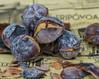 Castanhas (Daniel Doswald) Tags: food macro portugal lamego castanhas