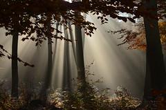 DSC_8673 es war einmal...so fangen Märchen an...ein Traum...??? - Once upon a time ... so start fairy tale ... a dream ... ??? (baerli08ww) Tags: autumn mist fall forest sunrise germany deutschland nikon nebel ngc herbst natur spiderweb npc wald sonnenstrahlen rheinlandpfalz westerwald rhinelandpalatinate coth5 westerforest