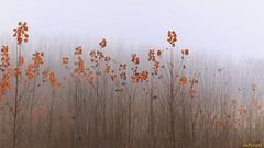 Read tears (Patxeti) Tags: autumn fog landscape fuji paisaje otoo niebla navarra ibero lainoa nafarroa udazkena patximartinez fujifilmxe1 patxeti