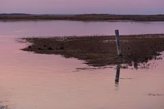 One pile in purple time (meblogoo) Tags: water japan evening twilight hokkaido purple sony pile   a7   nemuro 7   shunkunitai sel70200g fe70200