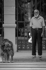 Cruzada lenta (Lukas Osses Codelia) Tags: chile santiago gente perro paseo futbol libre sed pular pelota abuelo vagabundo ahumada vago monocromatico pordiosero