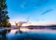 Lake Wanaka (Squid Rings (John Burland)) Tags: lake wanaka sunrise sunset water reflections tree light holiday vacation beautiful awesome