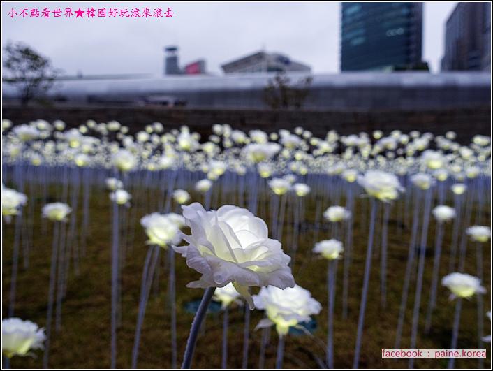 東大門DDP LED玫瑰花展 (7).JPG