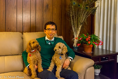 Happy Holidays! (Tri Minh) Tags: christmas xmas poodles miniature miniaturepoodle redpoodle