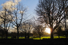 winter sunshine (MaggyN (failing miserably to catch up - sorry)) Tags: kingspark dalkeith