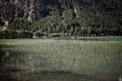 Wasserpflanzen (TheSunsetbiker) Tags: tirol sterreich flickr alpen landschaft publishing reise maurach achensee radreise osterreich 3land 5location torturealpium