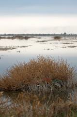 IMGP3474 (Axel12p) Tags: flamingos  kaloxori kalochori