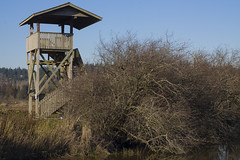 Lookout (BumFluff2009) Tags: park wood tower grass observation wooden sunny lookout surrey serpentinefen