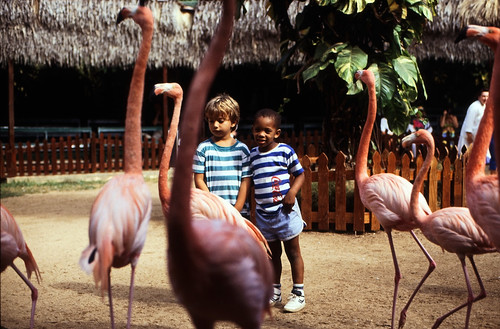 """Bahamas 1988 (086) New Providence: Ardastra Gardens, Nassau • <a style=""""font-size:0.8em;"""" href=""""http://www.flickr.com/photos/69570948@N04/23391793981/"""" target=""""_blank"""">View on Flickr</a>"""