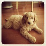 this-is-sadie--shes-one-of-ginger-and-chewys-girls_7161252993_o