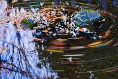 late autumn pond (forestfaily) Tags: leica autumn sunset macro fall leaves japan rural garden landscape fun botanical pond nikon panasonic dg elmarit gh2 gh3 dusc lateautumn elmaritmacro