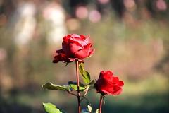 Sunny 2015 End (marinela 2008) Tags: romania bucharestbotanicalgarden