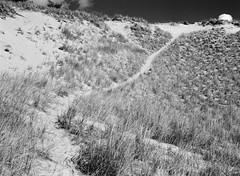 A line in the sand (pabs35) Tags: grandmerestatepark michigan sand sanddune dune nature film believeinfilm 120 mediumformat ilford fp4 fp4plus ilfordfp4plus mamiya m645 1000s mamiyam6451000s