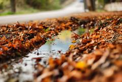 Autumn again (jimiliop) Tags: autumn leaves color water reflection seasons road dof carpet
