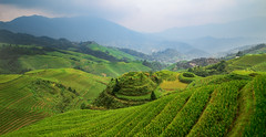 The (a)Mazing Longji Rice Terraces - Guilin - China (Rogg4n) Tags: china longji longjiriceterraces guilin canoneos100d rice iconic hills nature forest mountains landscape longsheng guangxi travel efs1018mmf4556isstm field asia culture agriculture panorama lines geometry