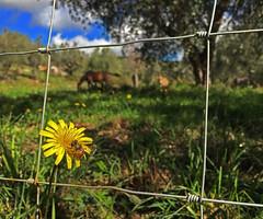 (autobusapedali) Tags: flowers squared iphonegrafia nature guardiantravelsnaps huffpostita throughoutitaly whatchthisinstagood tuscanylandscape