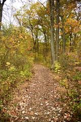 JJN_3324 (James J. Novotny) Tags: chicago conservatory botanical gardens garden flowers flower nikon d750 path paths skokie lagoons