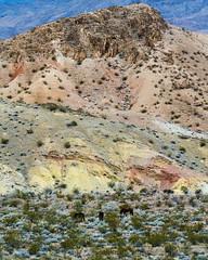 047-VOF160131_46902 (LDELD) Tags: nevada desert rugged dry harsh wild clouds stormy rocks sand foramations lakemeadnationalrecreationalarea lasvegas horses mountain shrub bush wildhorse