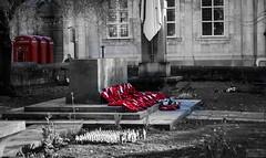 Remembrance (williams19031967) Tags: remembrance red poppies poppy reddish black white street church yard northampton england midlands northamptonshire 50mm f18 bokeh pentax dslr ks1