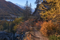 Last kiss from golden light (Marco MCMLXXVI) Tags: cogne lillaz aosta italy granparadiso outdoor landscape view vista panorama nature light shadow fall autumn autunno luce colors colori mountain montagna valley canyon foliage trees dorest alberi path sentiero ombra lightandshadow sony ilce6000 a6000 pz1650 alps alpi europe travel tourism hiking escursionismo dynamicrange mountainside tree natura walking