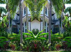 043POv (Symic) Tags: port vallarta mexico andrswilliamolsenrodriguez symmetry relect mirror double lighten repeat palm succulents hidden staircase winding back translucent greenery