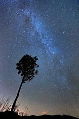 Reach Fir the Sky (Nick Landells) Tags: tree milkyway stars starry sky night