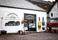 Tobermory Distillery #tobermorydistillery #tobermory #distillery #whisky #dogs #scotland #scottishislands #visitscotland