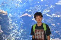 California Sciences Museum (jmarnaud) Tags: usa 2016 california summer family san francisco sciences museum fish color aquarium people kiki