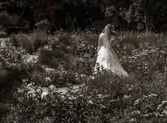 The Bride at the Red Butte Garden and Arboretum (julesnene) Tags: botanicalgarden canon7dmark2 canon7dmarkii canonefs1755mmf28isusm juliasumangil redbuttegarden redbuttegardenandarboretum saltlakecity utah weddingphotography arboretum garden julesnene travel unitedstates us