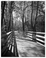 Lake Roland ~ boardwalk shadows - HFF! (karma (Karen)) Tags: lakeroland baltimoreco maryland parks boardwalks trees shadows fences hff monochrome bw iphone topf25