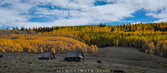Abandoned Colorado Cabin (Mike Ver Sprill - Milky Way Mike) Tags: abandoned house ohio pass road abstract yellow aspen trees tree art artsy colorado travel crested butte roadtrip trip co beautiful fall foliage autumn seasons changing nature landscape motion mike ver sprill michael versprill panorama pano panoramic nikon d800 fine america photography photo texture serene cabin urbex urban exploration rurex rural decay