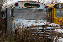 School Board (cjb_photography) Tags: junkyard mcleansautowreckers miltonon rust schoolbus