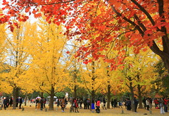 Fall colours On Explore 1 Nov 2016 (kyuen13) Tags: