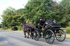 The Flaeijel Festival parade (Davydutchy) Tags: flaeijelfeest flaeijel festival feest dorpsfeest nijhoarne nieuwehorne âldhoarne oudehorne fryslân friesland frisia frise nederland netherlands niederlande paysbas holland country life platteland boer farmer bauer fermier paysan agricultural community hynder horse paard pferd konj hest ĉevalo കുതിര caballo лошадь kůň fries friesian frisian koets rijtuig carriage kutsche