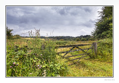 Barbed Gate (Seven_Wishes) Tags: newcastleupontynenortheast tyneandwear photoborder canoneos5dmark3 canonef24105mmflis landscape tanfield farmland track farmtrack trees hedge fields rural tree flowers clouds countryside hills woodland grass plant wildflowers gate woodengate thistles overcast barbedwire outdoor