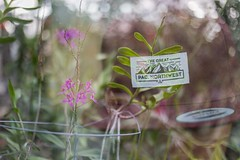 PNW (imbaoroh) Tags: double exposure pacificnorthwest pnw washington thegreatpnw hat flower plants photography art fine