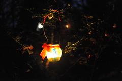 La-magia-del-bosco-di-notte-2016-51