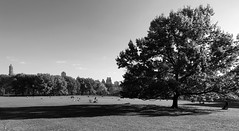 Shadow (Joe Josephs: 2,861,655 views - thank you) Tags: centralpark nyc newyorkcity travel travelphotography urbanlandscapes urbanparks landscape landscapephotography outdoorphotography blackandwhitephotography blackandwhite landsacapes