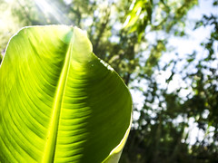 radiografa de luz  Isma Ortiz (Ismael Ortiz Tornacolor) Tags: hoja seed green nature light sun traslusido shining brillante luz sol verde rayo atmosfera