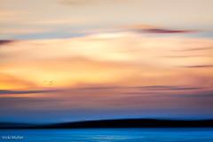 img_4081.jpg (Vicki Mullet) Tags: intentionalcameramovement longexposure sunset icm water abstract movement fineart birds slowshutter seattle lakewashington