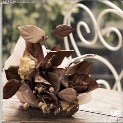 nostalgie DxOFP_DSF2347 (mich53 - thank you for your comments and 3M views!) Tags: bouquet nostalgie rtro fui xt1 xf60mmf24rmacro flowers souvenirs nostalgia bouquets roses memories retro blumenstruse rosen erinnerungen graphicalexploration carr old actestraus oldbouquet druideflowers getrockneteblumen faded flower verblassteblume    rose rosa