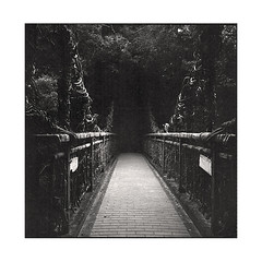 bridge to darkness  kobe, japan  2015 (lem's) Tags: bridge darkness obscurit pont forest foret japon japan rolleiflex planar