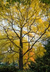 Last of Autumn 9 (Lensjoy) Tags: autumn fallseason lensjoy vividcolours botanicalgardens ogródbotaniczny