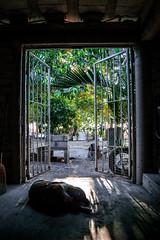 Amaneciendo (SeorNT) Tags: door rustic trees light sunday dog shades shadow rancho sinaloa
