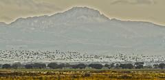 IMG_0706 (berserker170) Tags: grullas cranes crane grulla 7d eos 150500 canon winter invierno naturaleza nature mountain montaña villuercas extremadura españa flickrexploreme