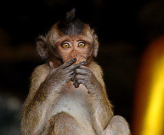,, Gang Signs ,, (Jon in Thailand) Tags: gangs gangsigns jungle junglegangs primate monkey cave asia nikon nikkor d300 70300vr conehead eyes fingers boy gold fur ears blacknailpolish pinhead wildlife wildlifephotography