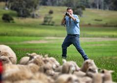 6Y1A1500_Snapseed (jensen_chua) Tags: australia newsouthsouthwales nsw tasmania tassie downunder roadtrip phototrip tourism