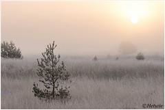sunrise (HP019846) (Hetwie) Tags: natuur frost ijs heather nachtvorst ice zonsopkomst kou rijp nature sunrise ochtend strabrechtseheide strabrecht frozen vorst heide lierop noordbrabant nederland